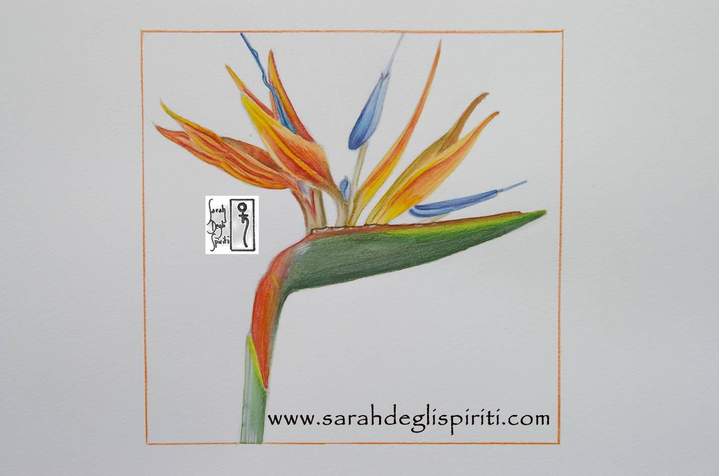 Fiore n.1